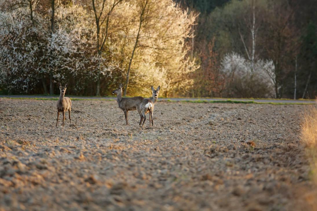 Hello my deer I