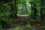 Green autumn I