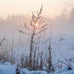 Foggy winter evening II