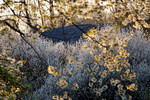 Orchard remains, May III