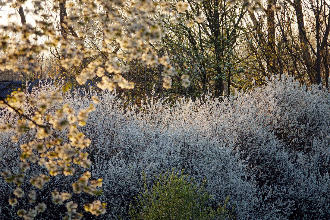 Orchard remains, May VI