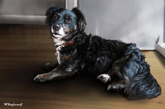 Pet Portrait: Maggie