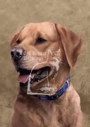 Pet portrait commission lab