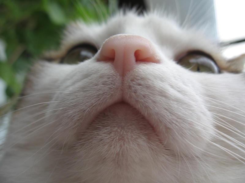 Face my cat :-D by lejka
