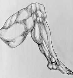 Leg anatomy practice #1 by BrofesserDRAWSstuff