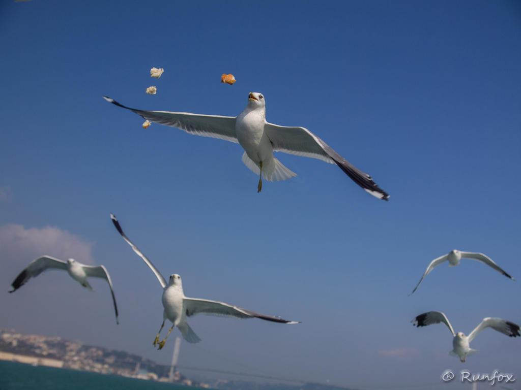 Angry birds by Runfox
