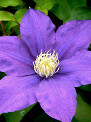 Purple flower of awesome II by Beccadinasour