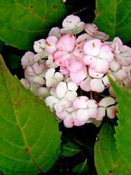 Bouquet by Beccadinasour
