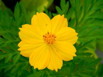 Yellow burst II by Beccadinasour