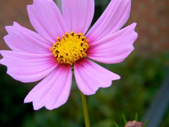 Wild flower power by Beccadinasour