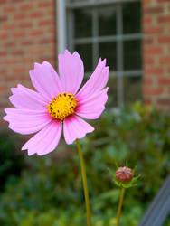 purple flower power by Beccadinasour