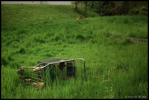 Where Shopping Carts go to Die