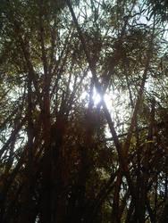 mtcoot-tha botanicalgardens 4