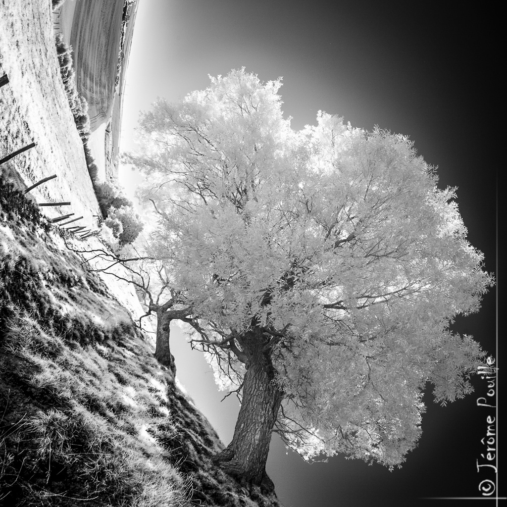 Magic tree... by jeje62