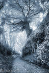 Hobbits road (infrared view) by jeje62
