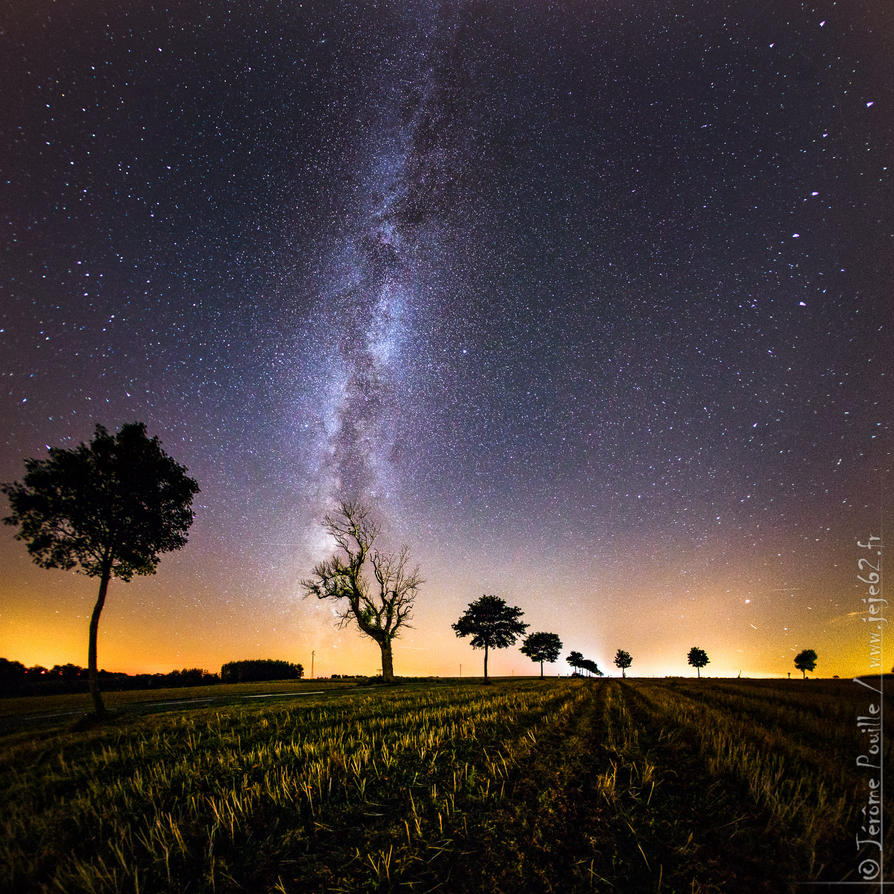 The tree who want to be a star in the milkyway by jeje62