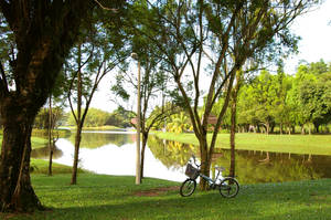 Bike in a park by greyregn