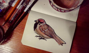 The sparrow on paper