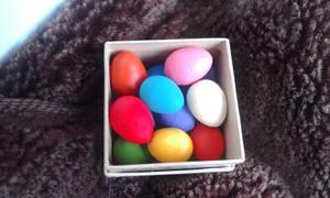 Multi-colored pigeon eggs! (3)