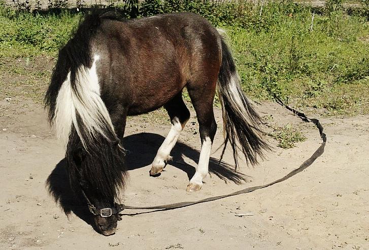 Another pony