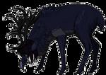 Corvus for Draak