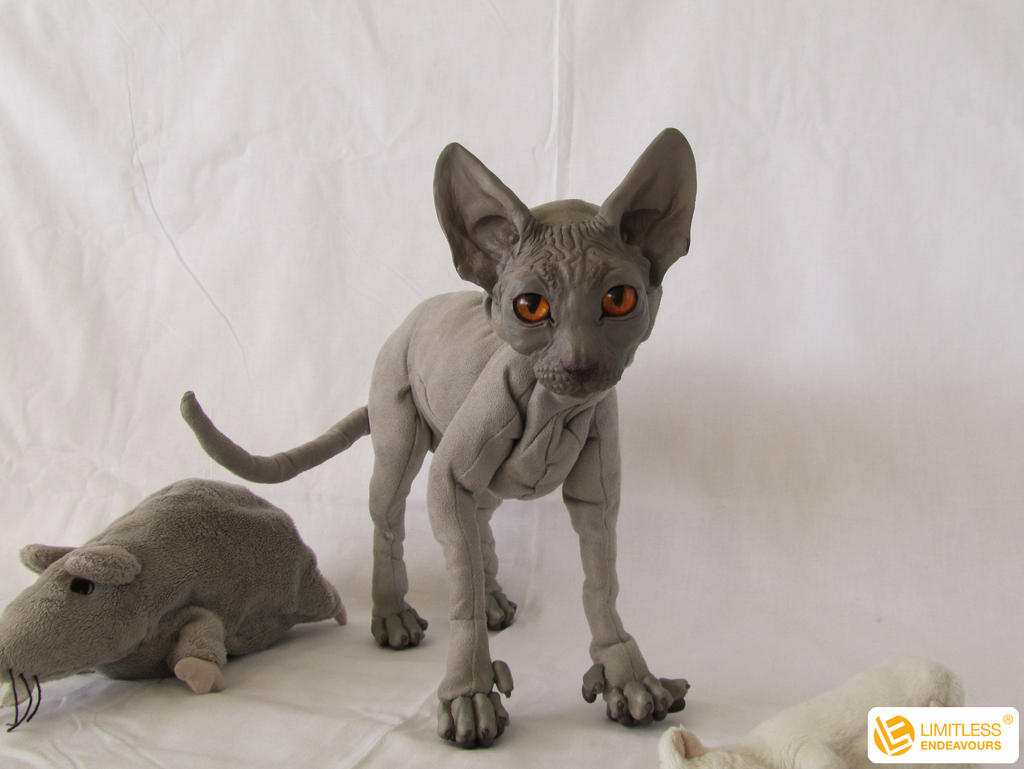 Egyptian Sphynx Cat For Sale