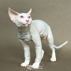 Albino Sphynx FOR SALE by LimitlessEndeavours