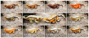 Crested Gecko Magnets