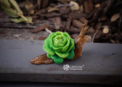 Lettuce Garden Snail
