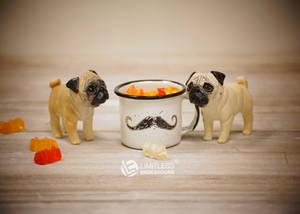 Miniature Pugs
