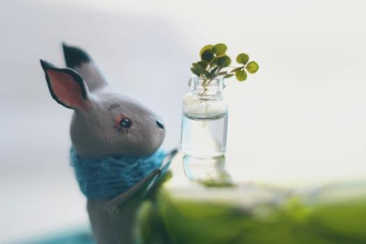 clover love by da-bu-di-bu-da