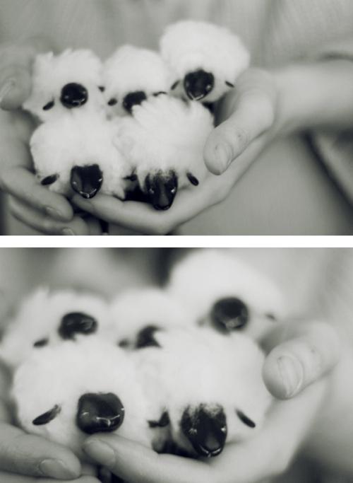 sheep in my hands by da-bu-di-bu-da