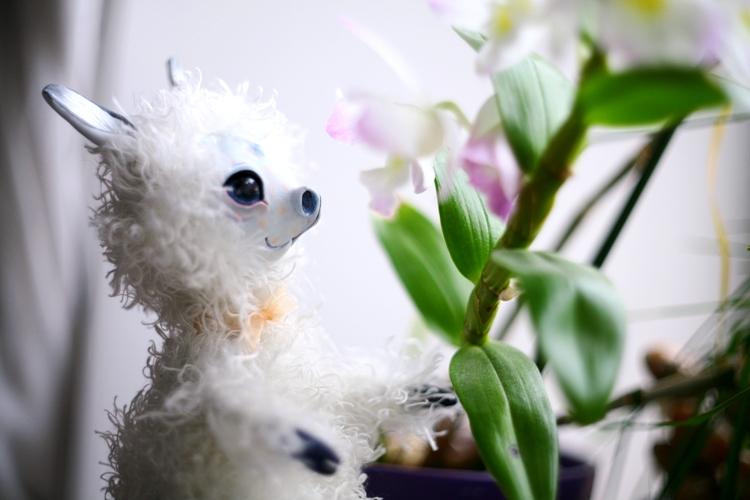 llama amd orchid by da-bu-di-bu-da