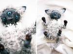 three eyes little kitty