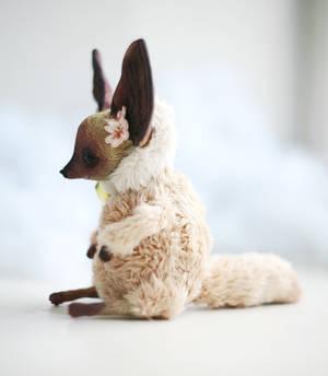 siamese coloured fox