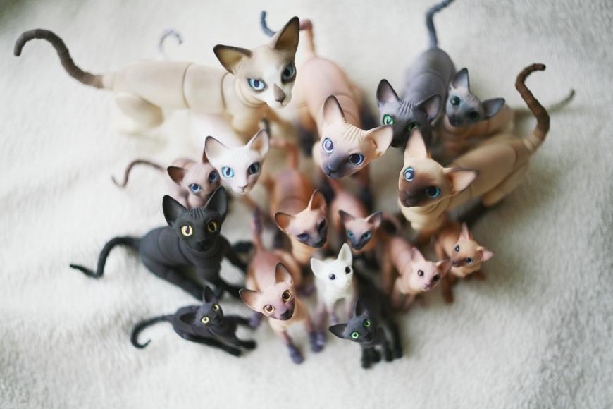 cats by da-bu-di-bu-da
