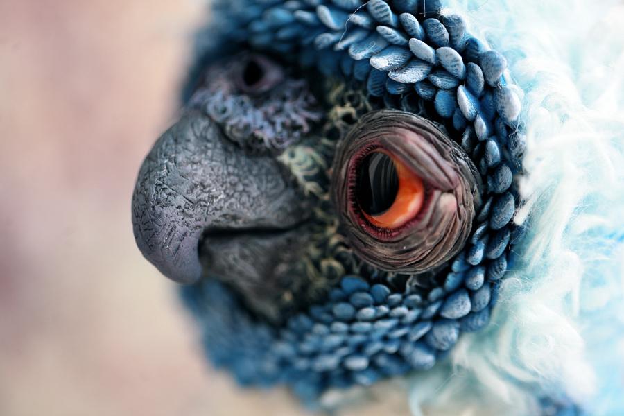 blue parrot by da-bu-di-bu-da