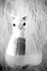 mermaid cat by da-bu-di-bu-da