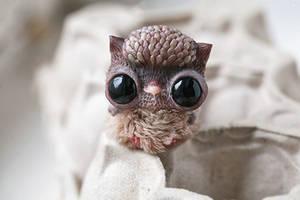 owlet by da-bu-di-bu-da