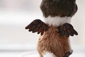 wings by da-bu-di-bu-da