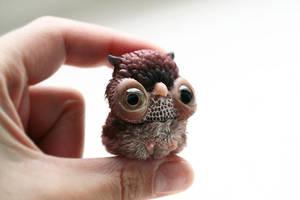 little owl by da-bu-di-bu-da