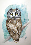 watercolor winter owl