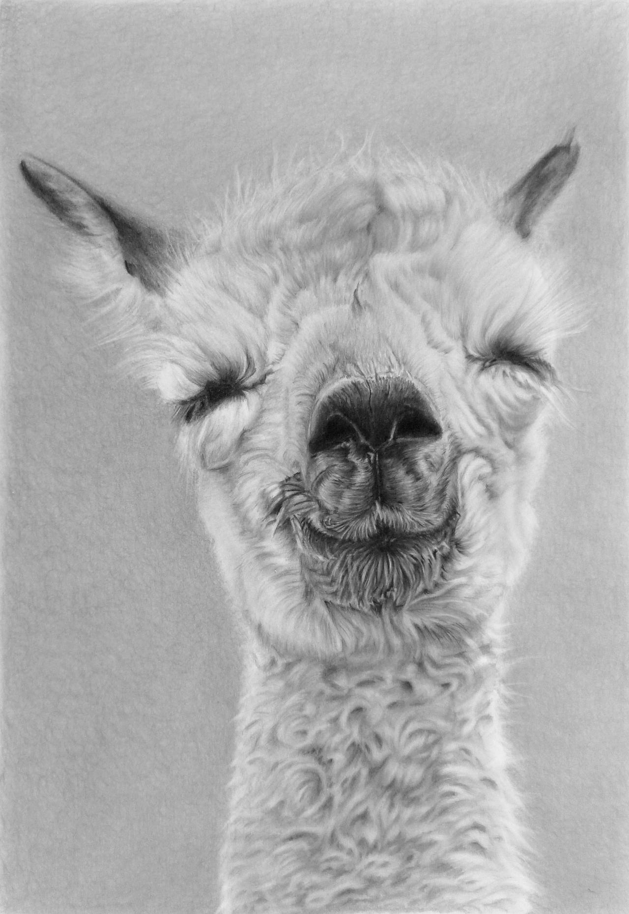 Pencil portrait of a baby alpaca by LateStarter63 on ...