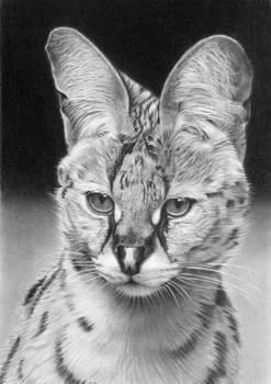 Pencil portrait of a serval