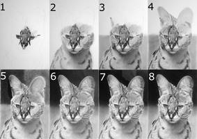 Serval Drawing Process