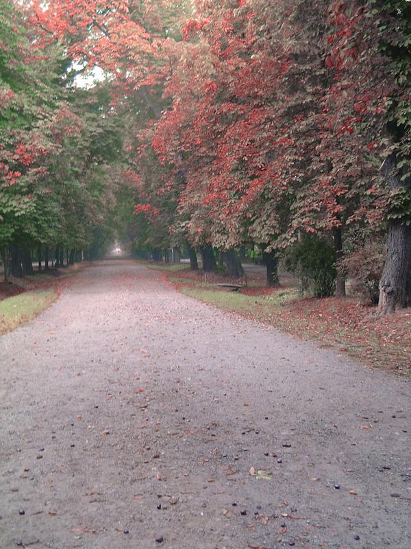 Autumn Leaves 2 by Maverick900407