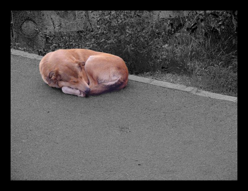 Sleepy by Maverick900407