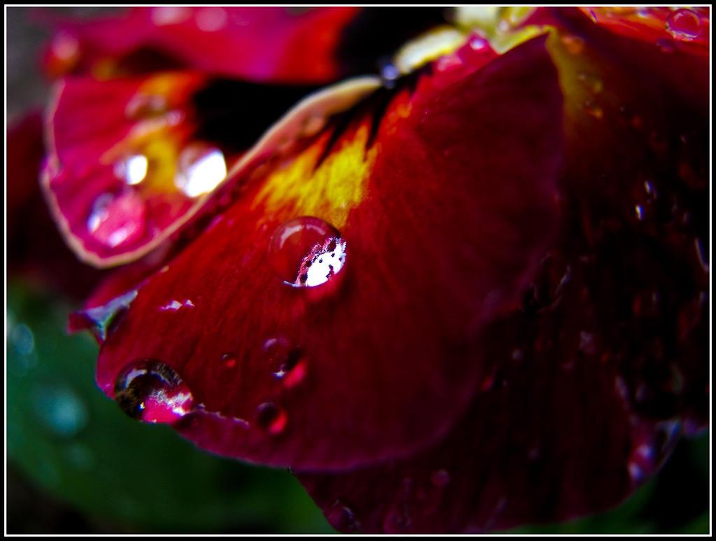 After The Rain Has Fallen 2 by Maverick900407