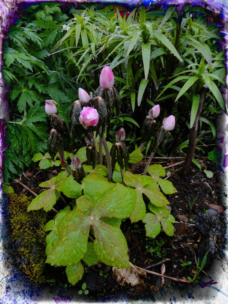 Garden fantasy 2 pe by Mytana