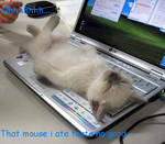 lolcats:mouse